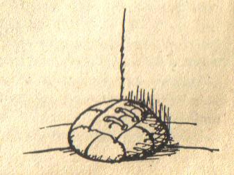 346-347-1.jpg